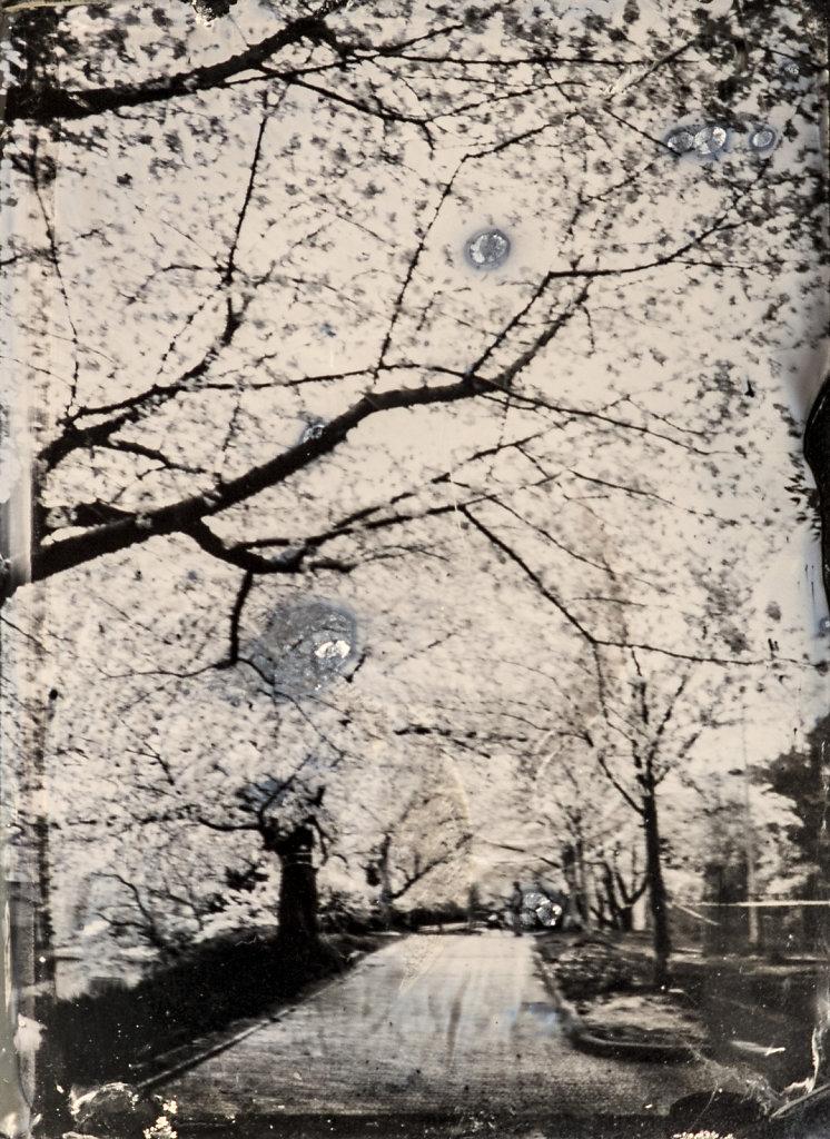 Japon-Collodion