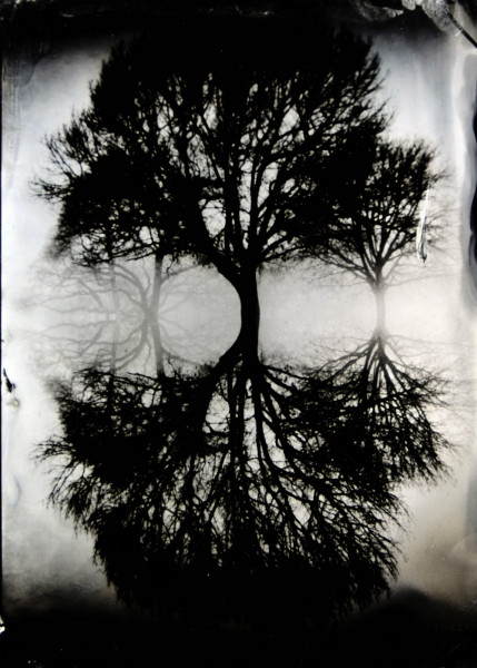 http://lumikoi.com/files/gimgs/th-74_2016_07_Collodion_Tree_Project_Benjamin_couradette_009.jpg