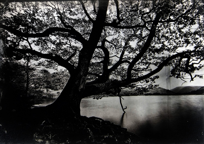 http://lumikoi.com/files/gimgs/th-74_2016_07_Collodion_Tree_Project_Benjamin_couradette_004.jpg