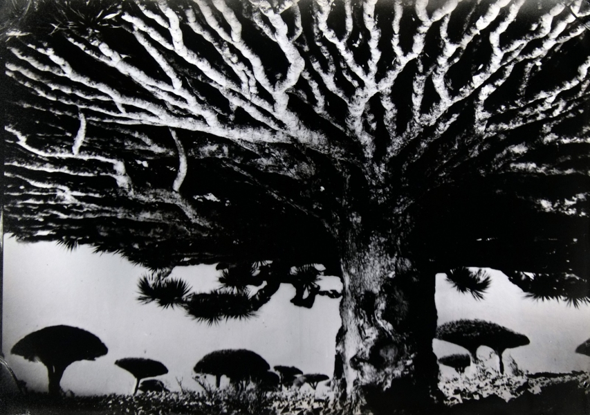 http://lumikoi.com/files/gimgs/th-74_2016_07_Collodion_Tree_Project_Benjamin_couradette_001.jpg