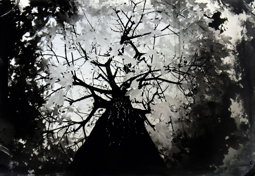 http://lumikoi.com/files/gimgs/th-74_2016_07_Collodion_Tree_Project_Benjamin_couradette_003.jpg