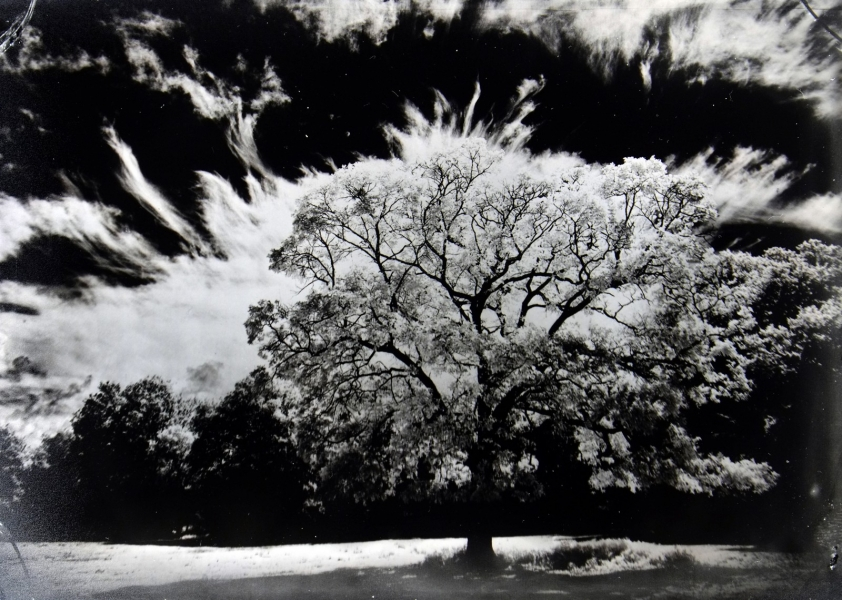 http://lumikoi.com/files/gimgs/th-74_2016_07_Collodion_Tree_Project_Benjamin_couradette_002.jpg
