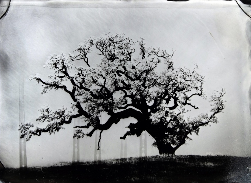 http://lumikoi.com/files/gimgs/th-74_2016_07_Collodion_Tree_Project_Benjamin_couradette_005.jpg