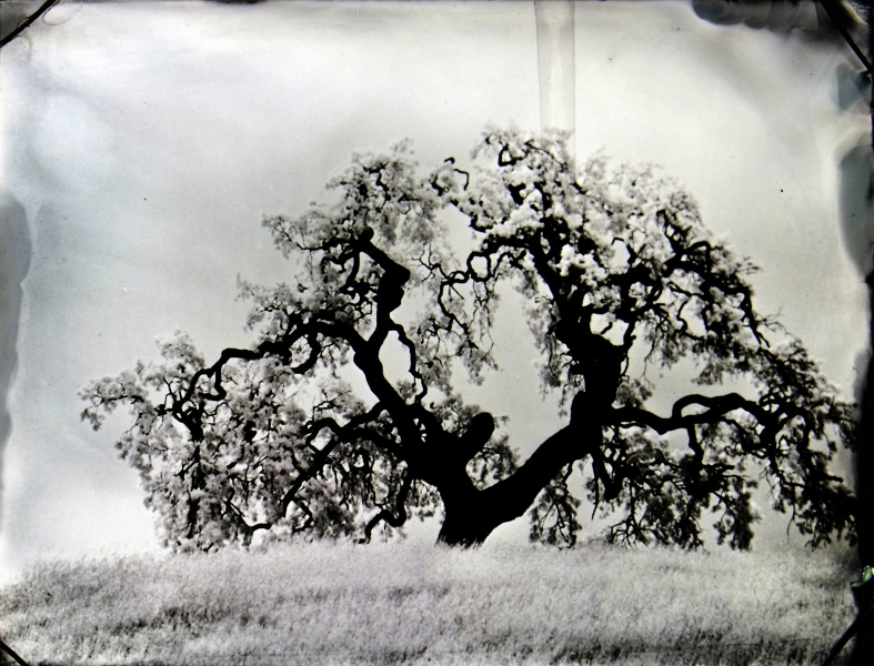 http://lumikoi.com/files/gimgs/th-74_2016_07_Collodion_Tree_Project_Benjamin_couradette_010.jpg