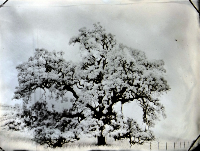 http://lumikoi.com/files/gimgs/th-74_2016_07_Collodion_Tree_Project_Benjamin_couradette_008.jpg