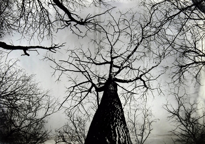 http://lumikoi.com/files/gimgs/th-74_2016_07_Collodion_Tree_Project_Benjamin_couradette_006.jpg